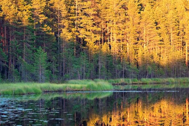 Um pequeno lago coberto de vegetação na floresta ao pôr do sol