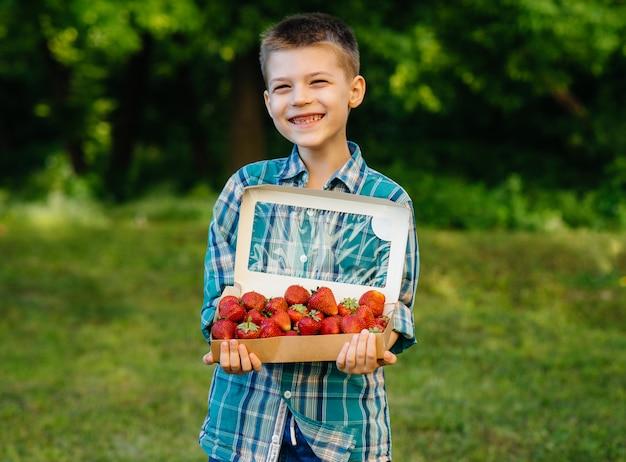 Um pequeno menino bonito está com uma grande caixa de morangos maduros e deliciosos. colheita. morangos maduros. baga natural e deliciosa.