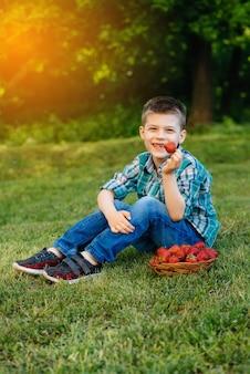 Um pequeno menino bonito está sentado com uma grande caixa de morangos maduros e deliciosos. colheita. morangos maduros