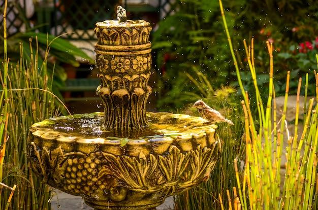 Um pequeno pássaro espirrando em uma fonte de água em um jardim em israel