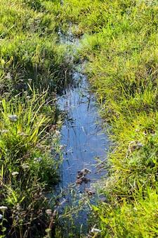 Um pequeno riacho estreito na margem do qual cresce grama verde