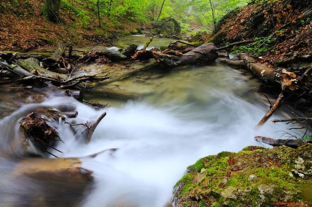 Um pequeno riacho flui com cascata e pedras cobertas de musgo ao redor