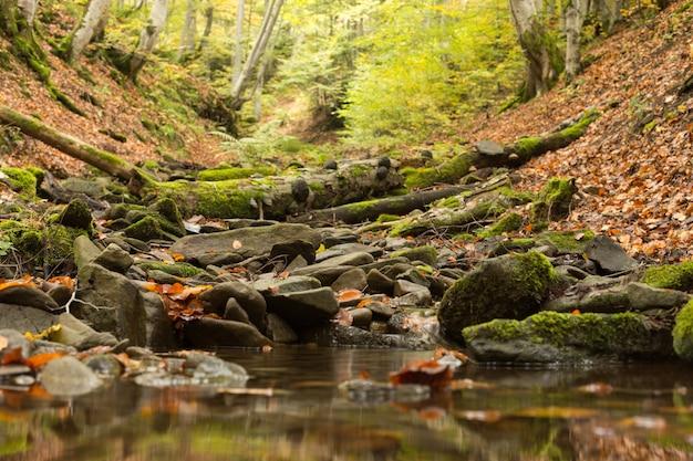Um pequeno riacho na floresta de faias no outono.