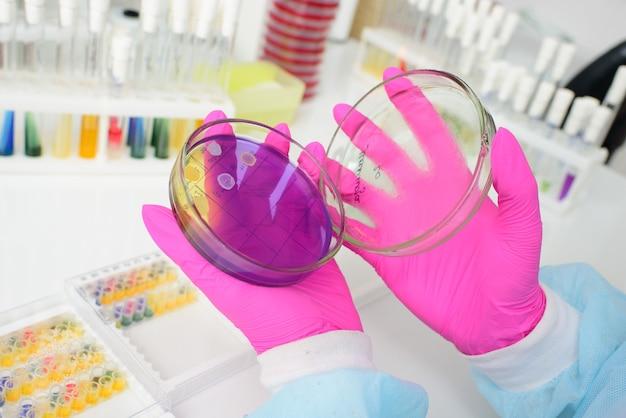 Um pesquisador preenche uma placa de petri com uma camada de meio nutriente e cultiva colônias de microorganismos.