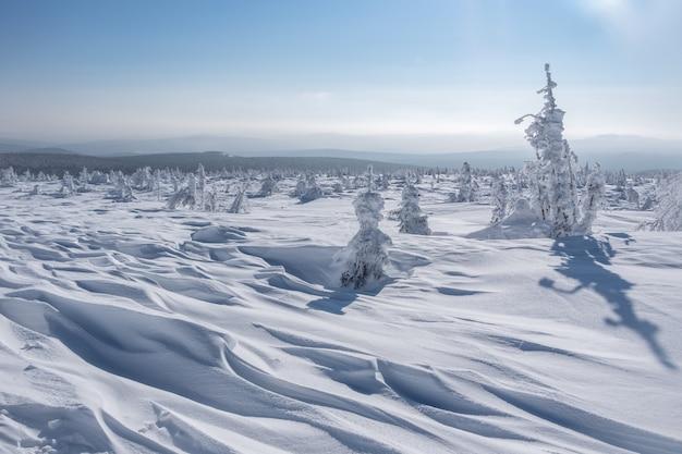 Um planalto nevado, montes e abetos de formas bizarras na neve após uma nevasca em um dia ensolarado.
