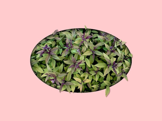 Um plano criativo de folhas de flores de plantas no buraco conceito de minimalismo tropical