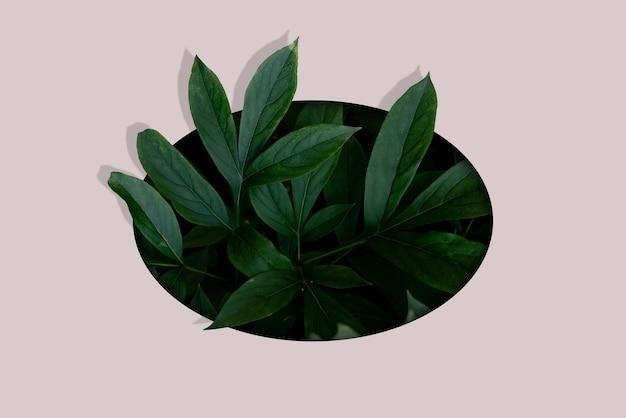 Um plano criativo de folhas de flores de plantas no buraco, conceito de minimalismo tropical