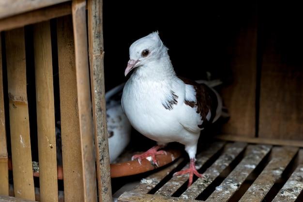 Um pombo branco parado dentro do loft perto do ninho