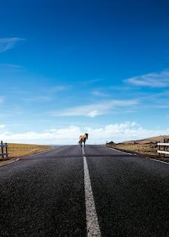 Um pônei selvagem andando em uma estrada estreita