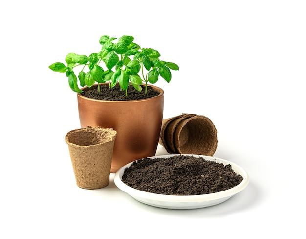 Um pote de manjericão, solo e vasos para mudas em um fundo branco. vista lateral com espaço de cópia. o conceito de cultivo.