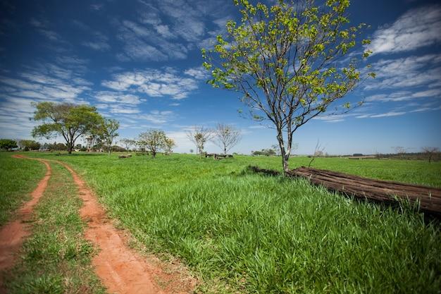 Um prado verde sob um céu azul. uma árvore e um tronco ao lado de uma estrada de terra.