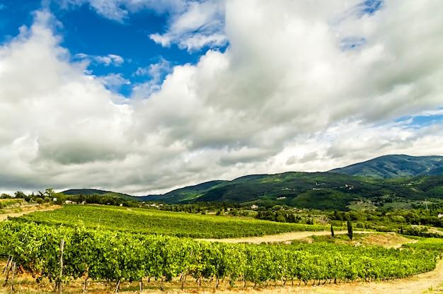 Um prestigiado vinhedo na zona rural de chianti (toscana, itália)