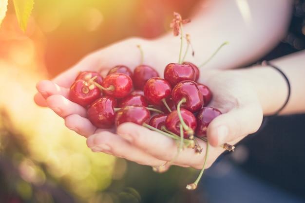Um punhado de cerejas maduras nas mãos
