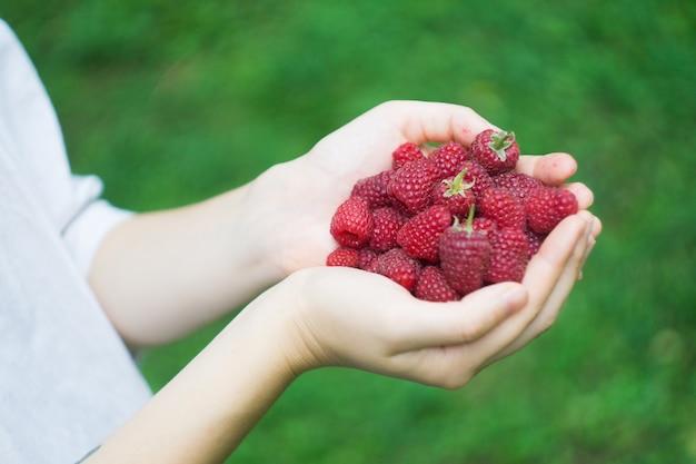 Um punhado de framboesas maduras floresta vermelha nas mãos de um jovem
