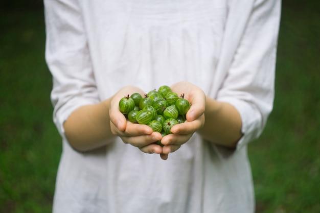 Um punhado de groselha verde floresta madura nas mãos de um youn
