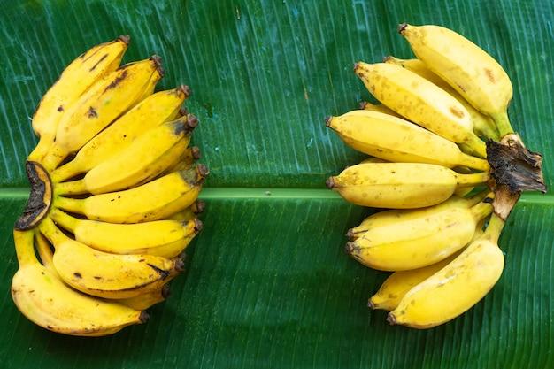 Um ramo de bananas amarelas suculentas em uma folha de banana verde. frutos maduros e suculentos.