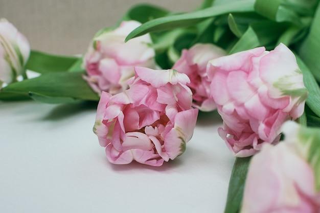 Um ramo de flores de tulipa de peônia rosa em fundo branco desfocado na frente e no fundo