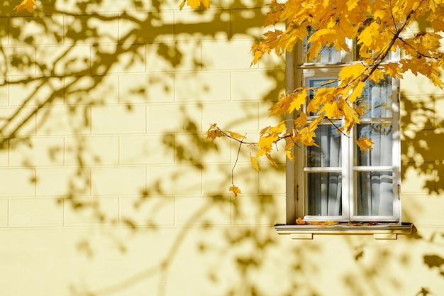 Um ramo de maple com folhas amarelas contra uma janela branca no edifício de cor amarela