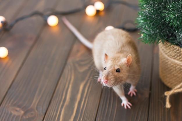 Um rato bege em uma mesa de madeira