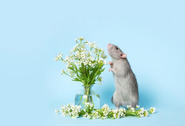 Um rato bonitinho está de pé nas patas ao lado de delicadas flores silvestres em uma parede azul.