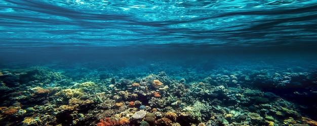 Um recife de coral subaquático no mar vermelho