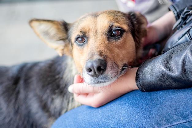 Um retrato de um cão com as mãos do proprietário