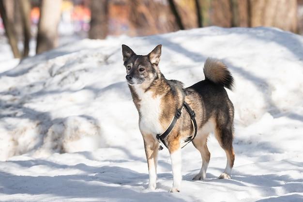 Um retrato de um grande cão vadio mestiço