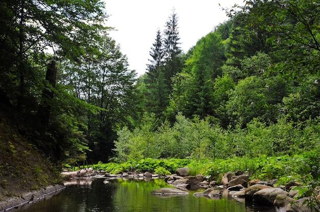 Um riacho na floresta ou um lago entre árvores com grandes pedras