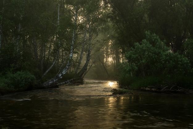 Um rio de montanha rápida flui entre as árvores. logs na costa. árvores derrubadas na água.