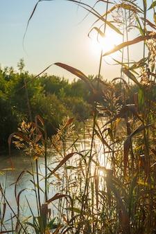 Um rio pantanoso no contexto do sol brilhante da tarde no verão.