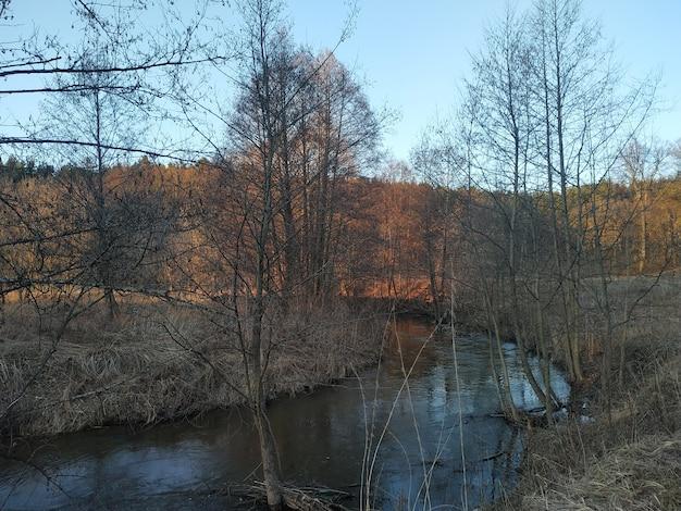 Um rio rodeado de árvores
