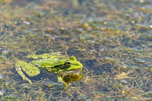 Um sapo sentado em um pântano