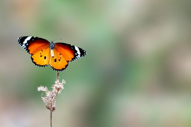 Um tigre simples voando sobre uma planta