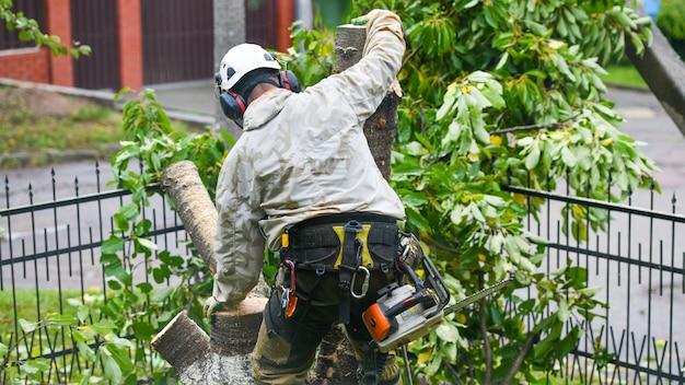 Um trabalhador com capacete trabalha a uma altura nas árvores. alpinista em uma parede branca. o homem arborista corta galhos com uma serra elétrica e a joga no chão. o lenhador trabalha com uma serra elétrica.