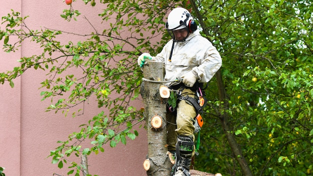 Um trabalhador com um capacete trabalha a uma altura nas árvores. o homem arborista corta galhos com uma serra elétrica e a joga no chão. lenhador trabalha com correntes.