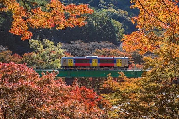 Um trem cruzando o rio kuji chegando à estação yamatsuriyama no outono no parque yamatsuri, prefeitura de fukushima, região de tohoku, japão.