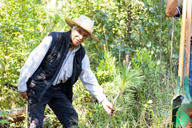 Um velho olhando para a câmera segurando uma pequena árvore para plantá-la em um buraco no chão no meio da floresta em um dia ensolarado