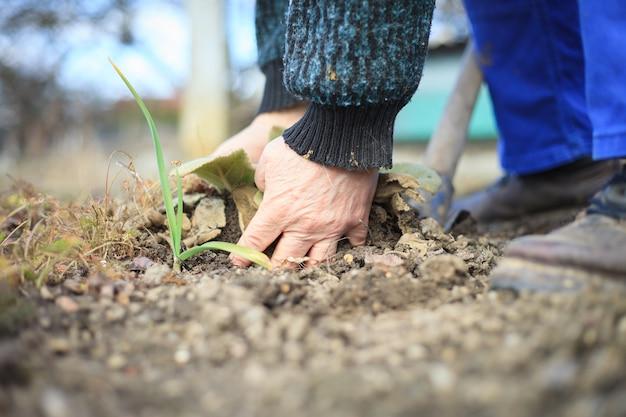 Um veterano veterano em atividade arrancando ervas daninhas de sua enorme clareira no jardim botânico fazendo tudo de maneira adequada