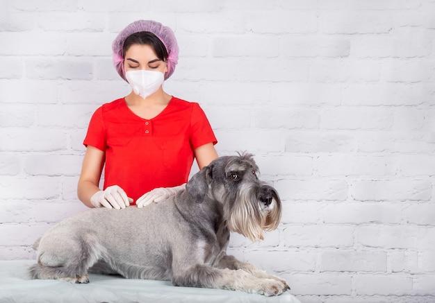 Um veterinário com uma máscara protetora e luvas examina o cão