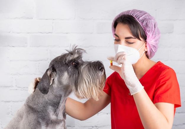 Um veterinário dá uma pílula a um cão doente