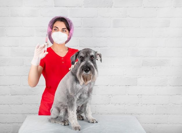 Um veterinário em uma clínica que dá uma injeção em um cão