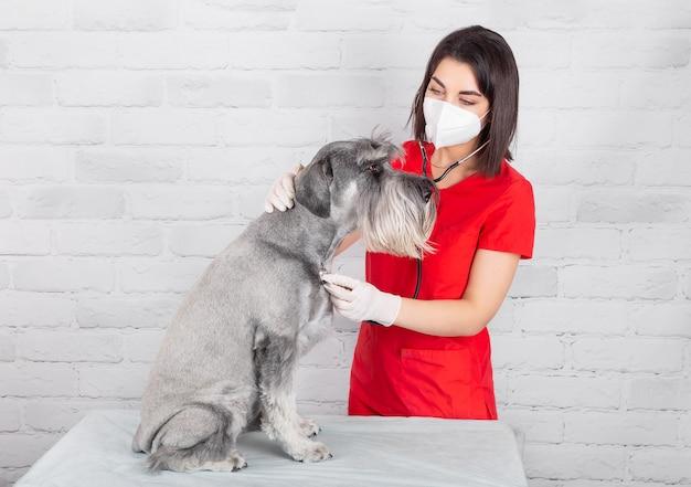 Um veterinário trabalhando em uma clínica com um cachorro usando um estetoscópio
