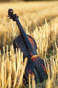Um violino no meio de um campo de trigo ceifado