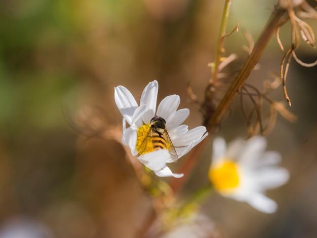 Uma abelha em uma flor