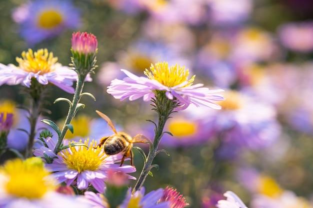 Uma abelha sentada em uma flor em crescimento