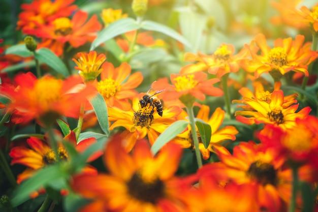 Uma abelha sentada em uma flor