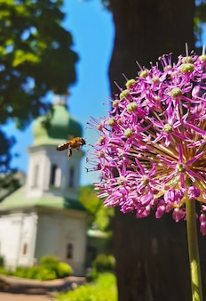 Uma abelha voando perto de uma grande flor, no fundo um fundo desfocado está uma igreja e um tronco de árvore