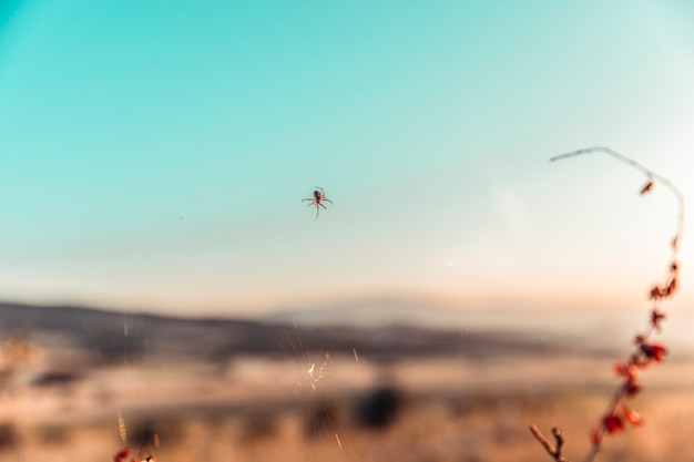 Uma aranha criando, portanto, na natureza