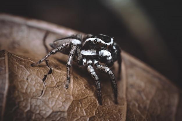 Uma aranha em uma planta seca com uma parede borrada