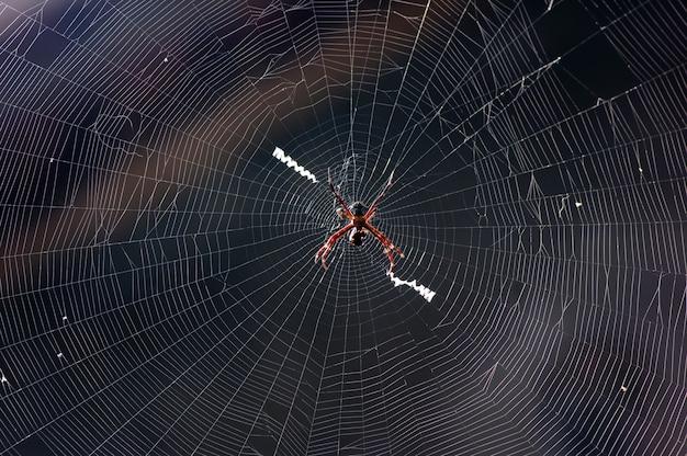 Uma aranha negra e sua rede bagunçada, foco raso com fundo desfocado